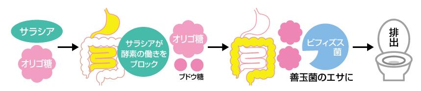 サラシアが強力サポート血糖値も体重も目指せスリム