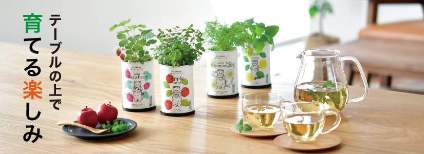 テーブルの上で育てる楽しみ<br>小さな園芸