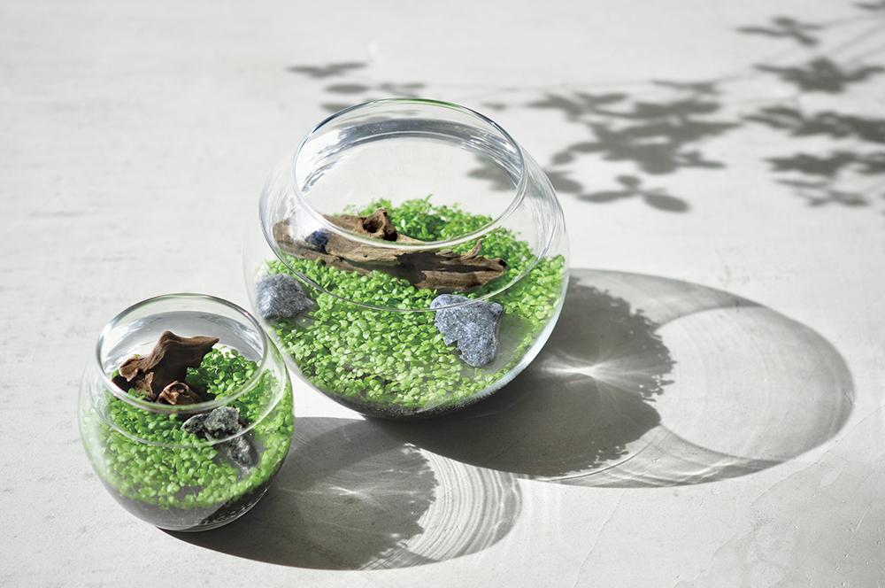 テーブルの上で育てる楽しみ小さな園芸